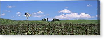 Windmill In A Vineyard, Napa County Canvas Print by Panoramic Images