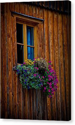 Window Box Canvas Print by David Waldo