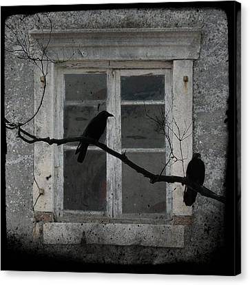 Window Dressing Canvas Print by Gothicolors Donna Snyder