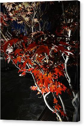 Window Of Sky And Flamed Leaves In My Eye Canvas Print by Kenneth James