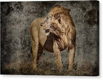 Windswept Lion Canvas Print by Mike Gaudaur