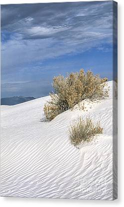 Windswept - White Sands National Monument Canvas Print by Sandra Bronstein