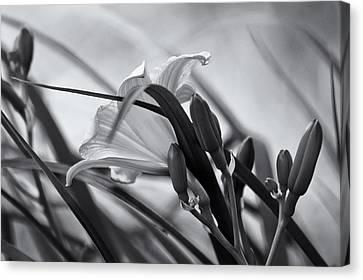 Windy In B/w Canvas Print by Robin Konarz