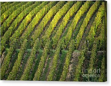 Wine Acreage In Germany Canvas Print by Heiko Koehrer-Wagner