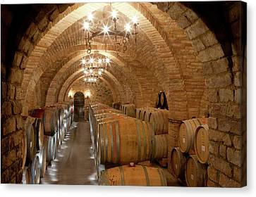 Wine Barrels In A Winery Canvas Print by Peter Menzel
