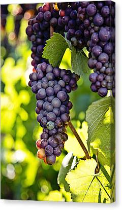 Wine Grapes Canvas Print by Scott Pellegrin