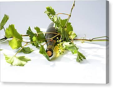 Wine Canvas Print by Patricia Hofmeester