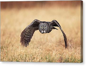 Wings Of Motion Canvas Print by Daniel Behm