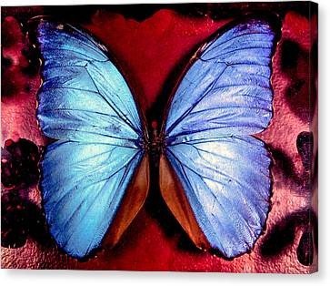 Wings Of Nature Canvas Print by Karen Wiles