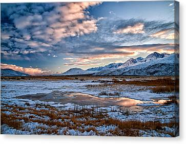 Winter Afternoon Canvas Print by Cat Connor