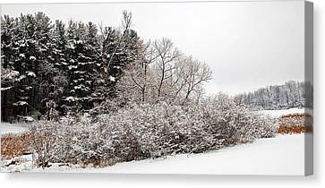 Winter Beauty Canvas Print by Aimee L Maher Photography and Art Visit ALMGallerydotcom