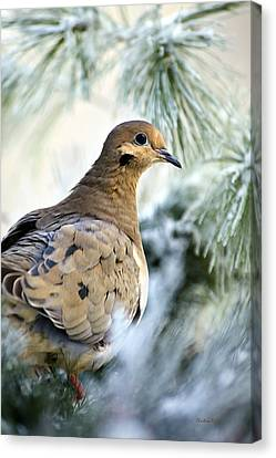 Winter Bird Mourning Dove Canvas Print by Christina Rollo