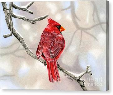 Winter Cardinal Canvas Print by Sarah Batalka
