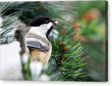 Winter Chickadee With Seed Canvas Print by Christina Rollo