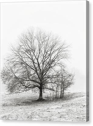 Winter Chrome Canvas Print by Cris Hayes