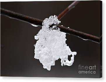 Winter Detail Canvas Print by Elena Elisseeva
