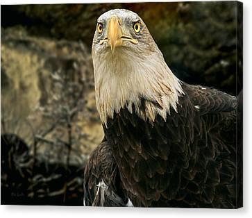 Winter Eagle Canvas Print by Bob Orsillo