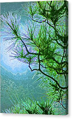 Winter Evergreen  Canvas Print by First Star Art