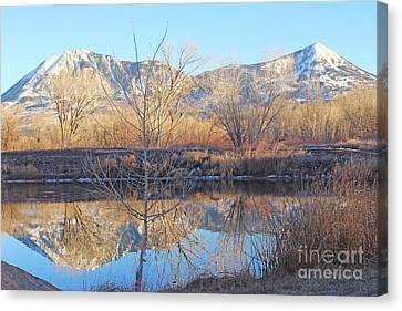 Winter Feb 2015 Colorado Canvas Print by Dale Jackson
