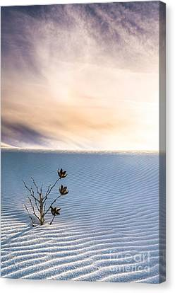 Winter Flowers Of White Sands Yucca Canvas Print by Ellie Teramoto