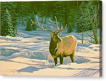 Winter Forage - Elk Canvas Print by Paul Krapf