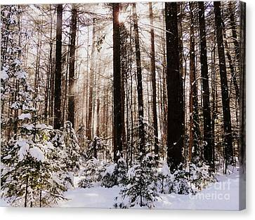 Winter Forest Canvas Print by Avis  Noelle