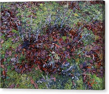 Winter Frost Peace Nature Denmark Canvas Print by Colette V Hera  Guggenheim