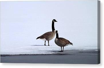 Winter Geese Canvas Print by Michael Sokalski