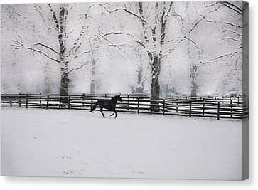 Winter Glory Canvas Print by Bill Cannon