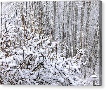 Winter Haven 2 Canvas Print by Will Borden