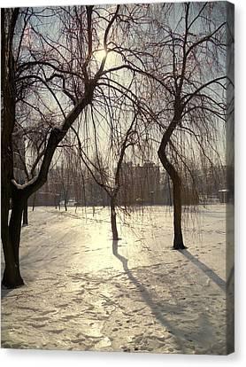 Willows In Winter Canvas Print by Henryk Gorecki
