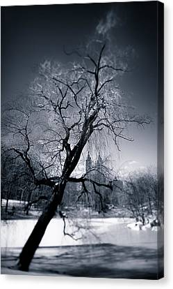 Winter In Central Park Canvas Print by Dave Bowman
