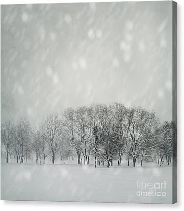 Winter Canvas Print by Jelena Jovanovic