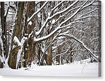 Winter Landscape Canvas Print by Elena Elisseeva