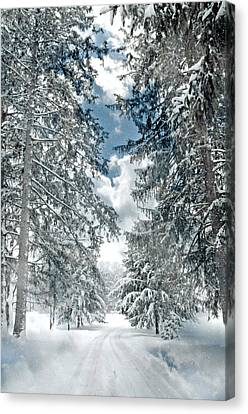 Winter Me Canvas Print by Diana Angstadt