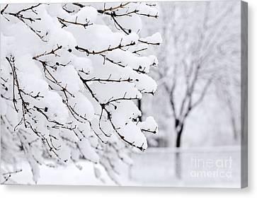 Winter Park Under Heavy Snow Canvas Print by Elena Elisseeva