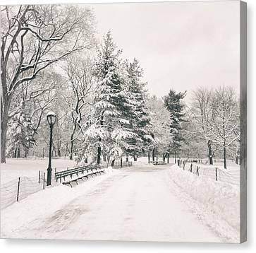 Winter Path - Snow Covered Trees In Central Park Canvas Print by Vivienne Gucwa
