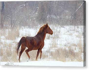 Winter Proud Canvas Print by Mike  Dawson