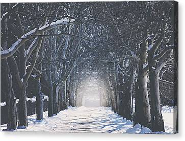 Winter Road Canvas Print by Carrie Ann Grippo-Pike