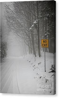 Winter Road During Snowfall I Canvas Print by Elena Elisseeva