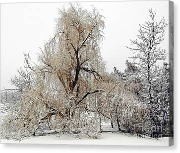 Winter Scene Canvas Print by Kathleen Struckle