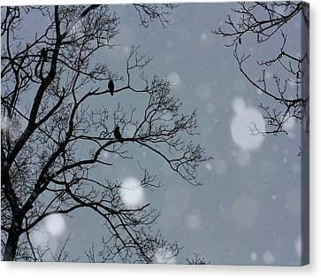 Winter Sky Canvas Print by Gothicolors Donna Snyder