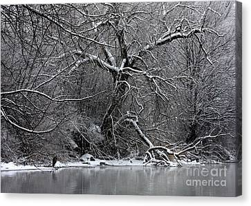Winter Solitude Canvas Print by Carol Groenen