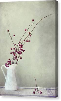 Winter Still Life Canvas Print by Priska Wettstein