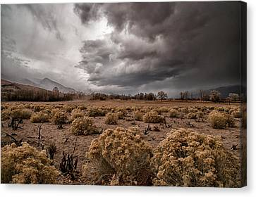 Winter Storm Canvas Print by Cat Connor