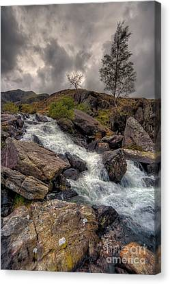 Winter Stream Canvas Print by Adrian Evans