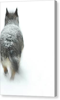 Winter Traveler Canvas Print by Karol Livote