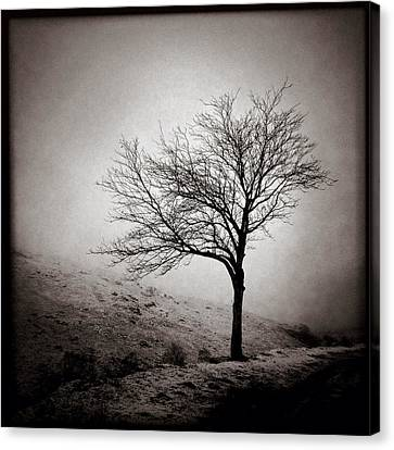 Winter Tree Canvas Print by Dave Bowman