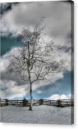 Winter Tree Canvas Print by Todd Hostetter