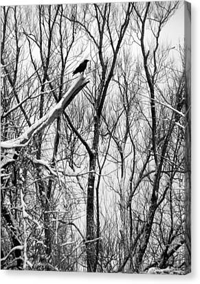 Winter Tree With Crow Canvas Print by Gothicolors Donna